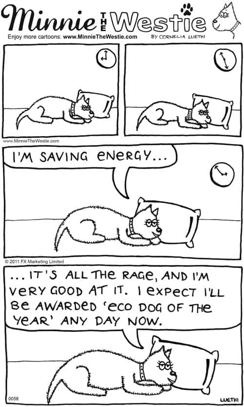 Minnie The Westie is an energy-saving Eco Dog