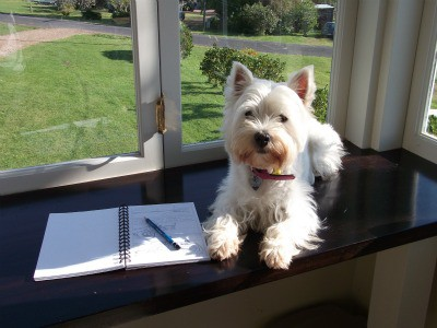 Minnie The Westie and her sketchbook