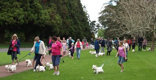 Westie Club Walk 2011