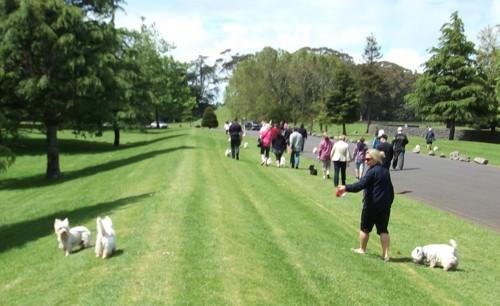 Westie Walk 2011