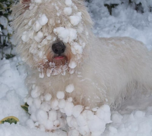 This is my cousin, Lady, in the snow in England!