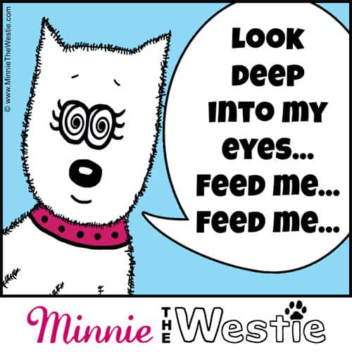 Westietude: Look deep into my eyes... feed me... feed me...