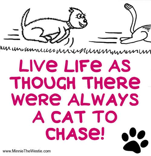 Life live as though there were always a cat to chase!
