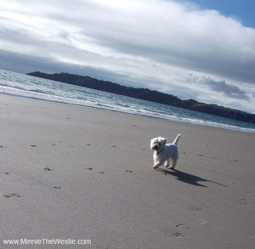 Yay, I love the beach!