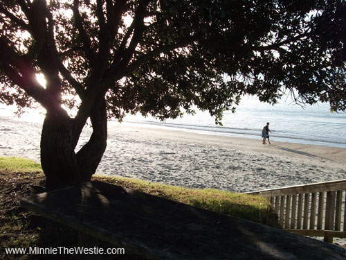This is where we went: Onetangi Beach on Waiheke Island (New Zealand)... it's very pawretty!