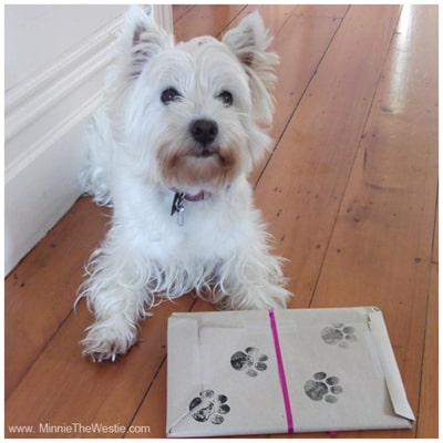 Minnie The Westie gives the pawcel her stamp of approval!