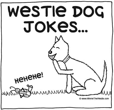 Westie dog jokes