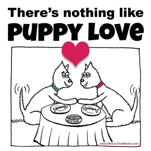 There's nothing like Puppy Love!