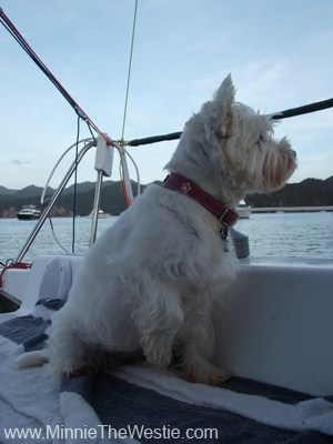 I wuff to keep watch on what's happening in the bay... mum calls me her Baywatch Babe! BOL!