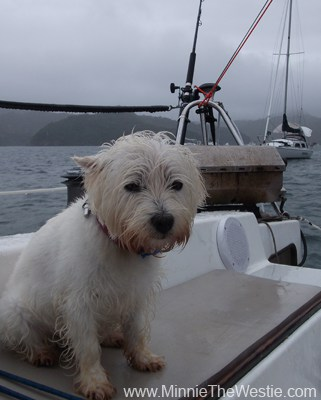 We did have one day of rain on holiday. It was still warm though, so I kept up my Baywatch guard dog duties!