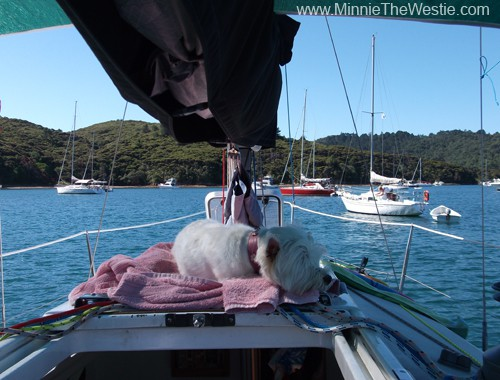 Ahoy! And welcome to my yacht! This is my favourite chillaxation spot when we're at anchor: it's nice 'n' shady, plus there's a great view. The breeze gently wafts over me, and I get to sniff all the latest sniffs!
