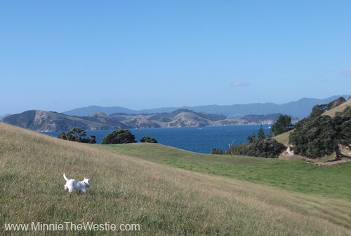 There are lots of hills for me to run down near this bay... pawfect for a Westie!