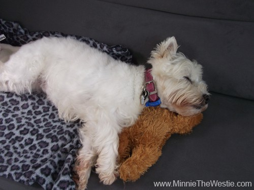 Phew, that was a big day! Lucky I have a nice comfy bunk in the cabin, and my teddy bear to use as a pillow. zzzzzz....