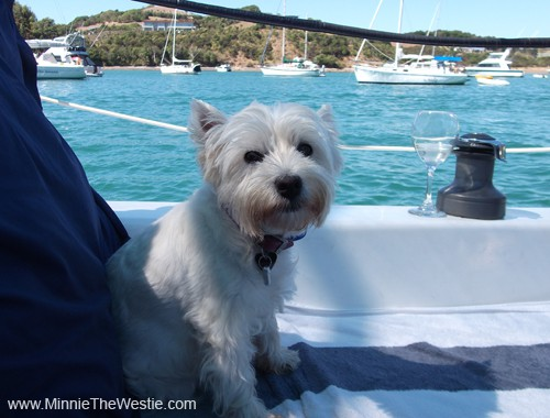 Minnie celebrates her 7th birthday in style on board her yacht!