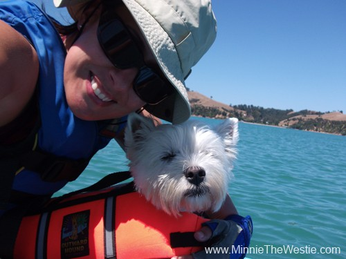 A life jacket is essential for kayaking dogs.