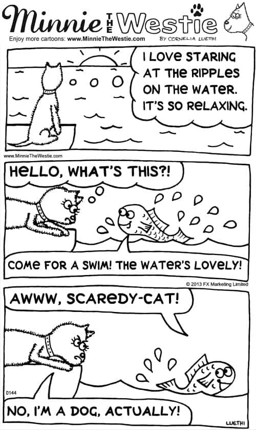 Minnie The Westie cartoon: Westies aren't scaredy-cats!