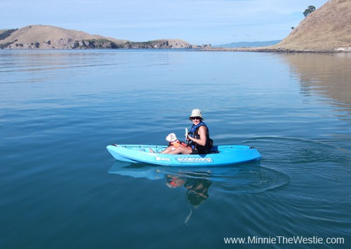 Mum takes me for a spin on the kayak. Look how flat calm the sea is, it's pawsome!