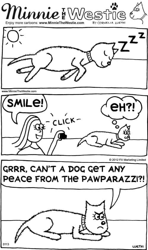 Minnie The Westie cartoon dog - pawparazzi pawroblems
