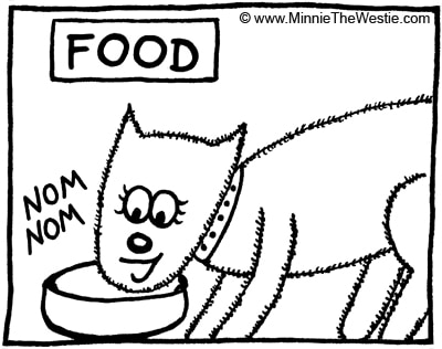 Westie allergies can be worse if your dog eats the wrong food... find out what food works best for your Westie.