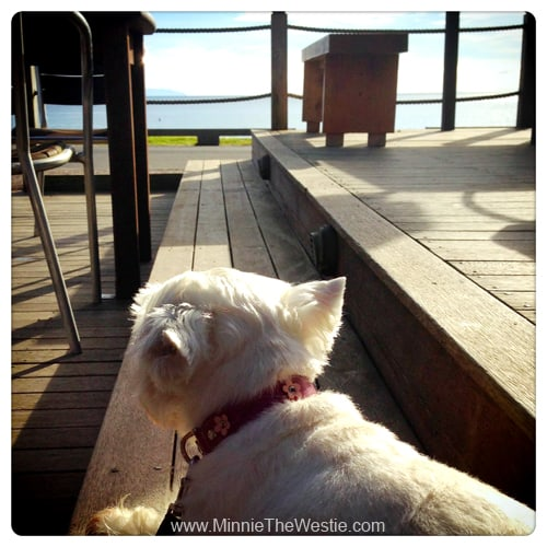 Even the cafe down the road has a pawsome sea view!