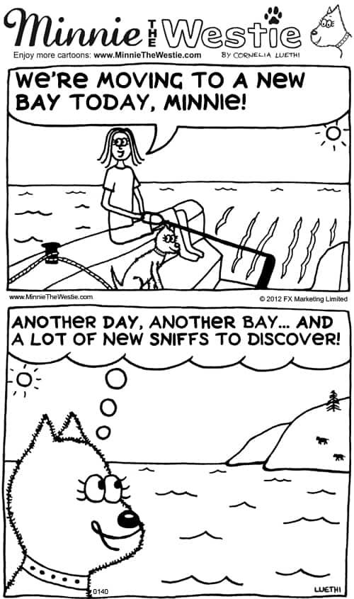 Minnie The Westie cartoon: minnie goes sailing to a new bay