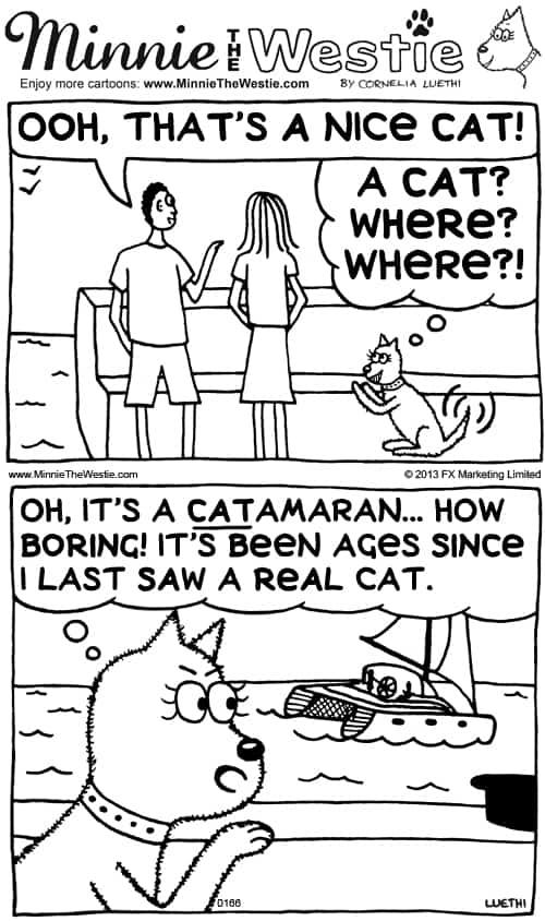 Minnie The Westie cartoon - cat confusion